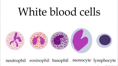 L-Lisin dan Pengaruhnya pada Sel Darah Putih kolesterol rendah