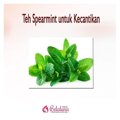 Teh Spearmint - Manfaat Kesehatan dari Teh Spearmint ajaib pada